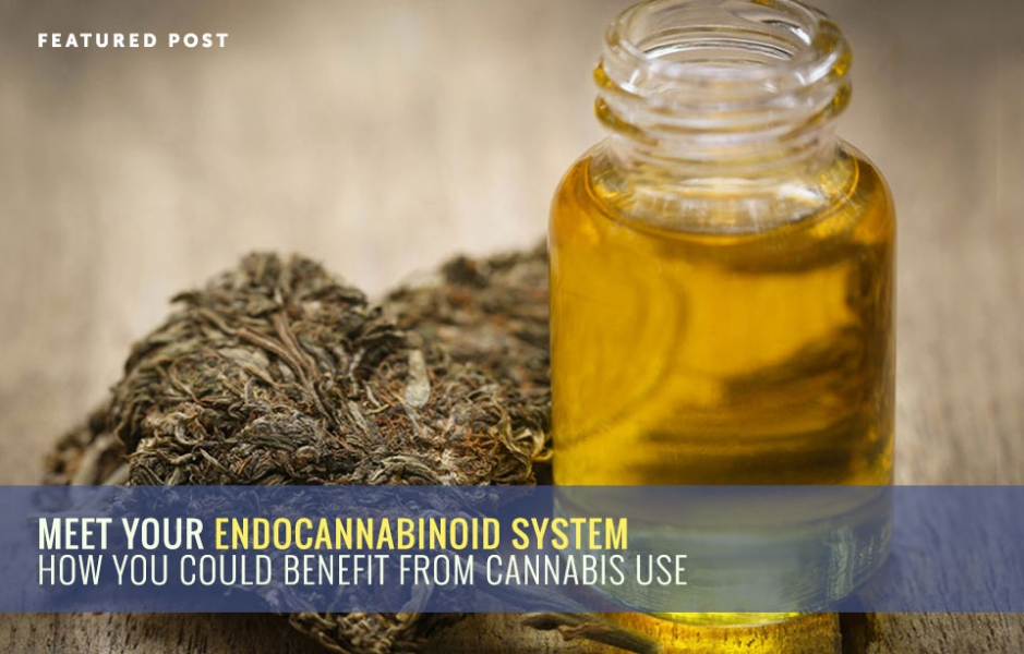 Meet Your Endocannabinoid System